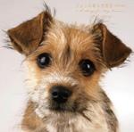 ジョンの純な恋物語【特別完全版】〜6 Songs for DOG LOVERS〜